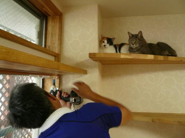 菅谷を見守るネコたち
